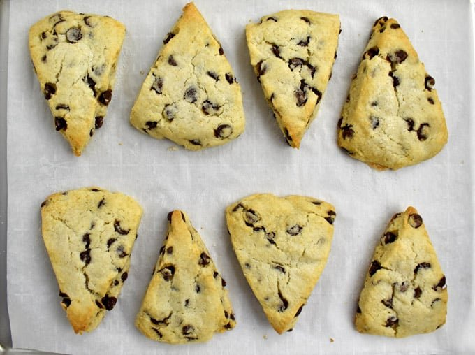 Overhead view of 8 baked Gluten Free Chocolate Chip Scones on a baking pan lined with parchment paper